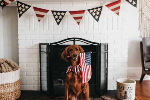 Photo free animal, flag of America, home zhivotnoe