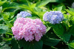 Фото бесплатно прекрасный, цветок, зеленый