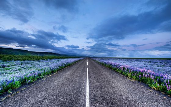 Photo free long road, horizon, flowers