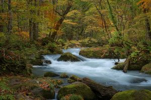 Бесплатные фото осень,лес,деревья,река,природа,пейзаж