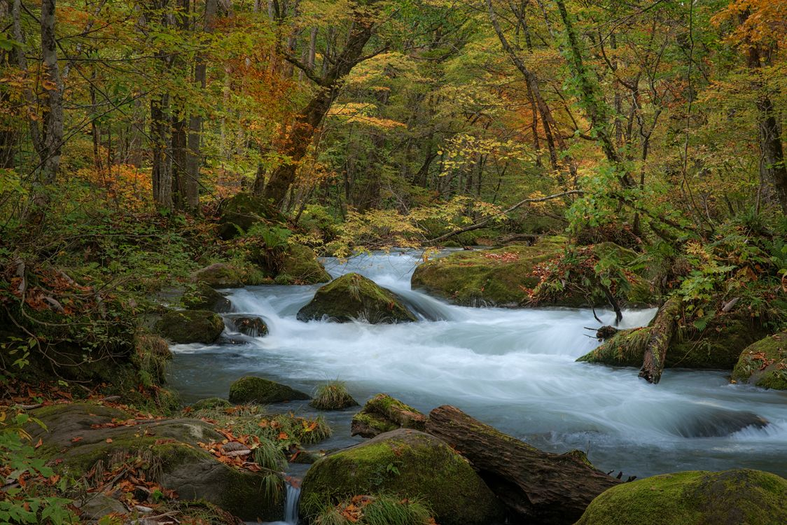 Фото бесплатно осень, лес, деревья - на рабочий стол