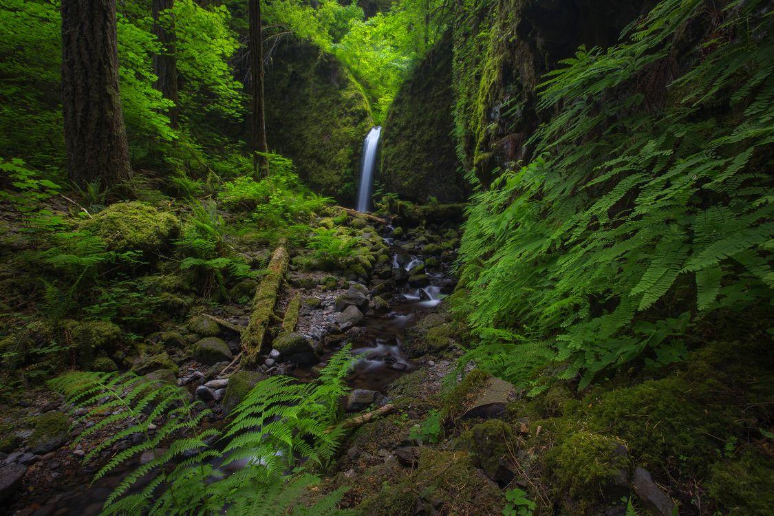 Фото бесплатно Ruckell Creek, Oregon, лес, деревья, водопад, речка, ручей - на рабочий стол