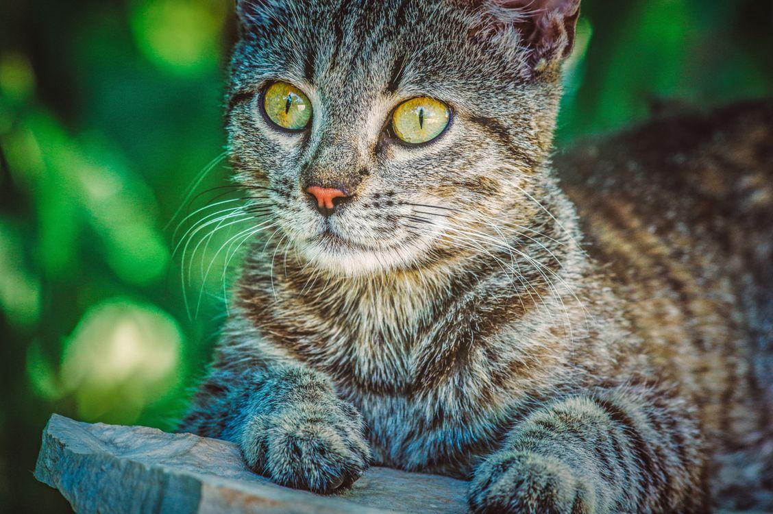 Удивленный кот · бесплатная заставка