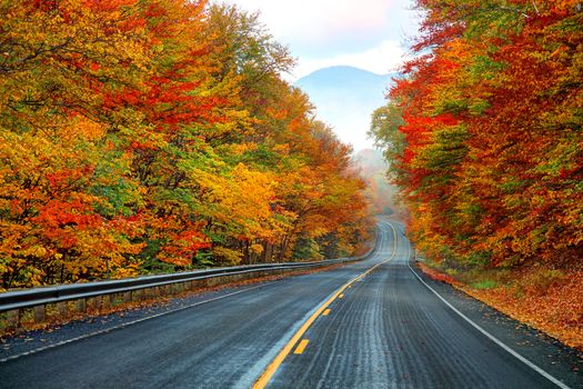 Photo free autumn, leaf, road