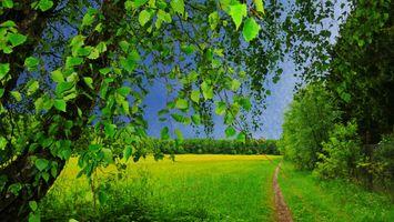 Бесплатные фото поле,трава,тропинка,деревья,природа,пейзаж
