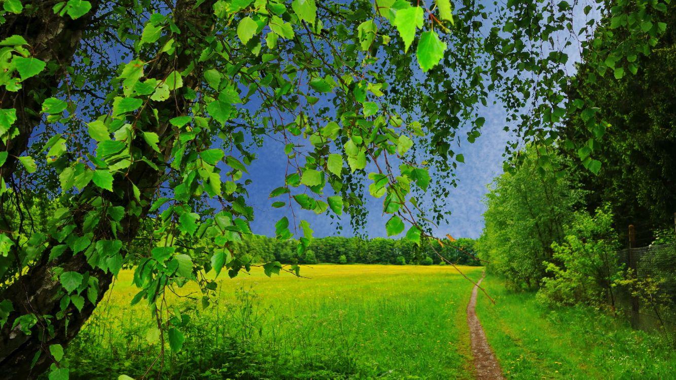 Фото бесплатно поле, трава, тропинка, деревья, природа, пейзаж, пейзажи