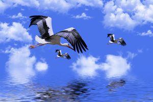 Бесплатные фото аист,крылья,летающий,природа,животное,небо,воды