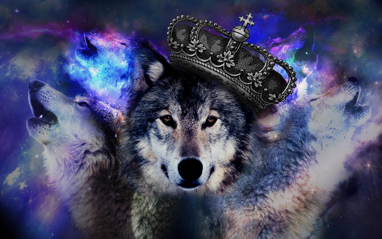 Букетом роз, крутые картинки волками