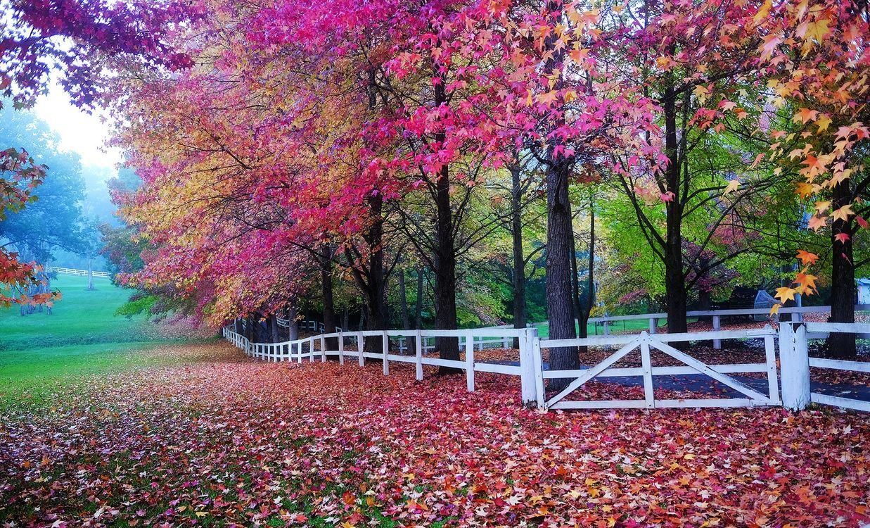Фото бесплатно осень, парк, поляна, деревья, листва, осенние листья, забор, природа, пейзаж, осенние краски, пейзажи