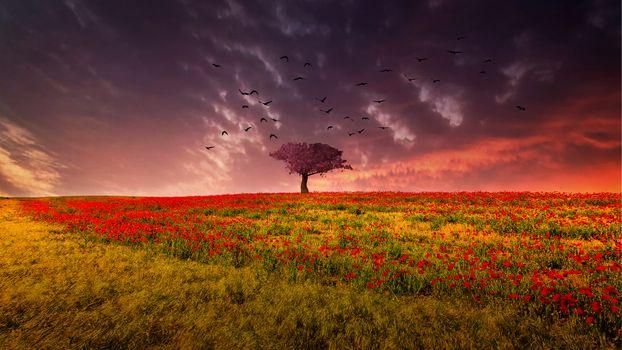 Photo free sunset, field, birds