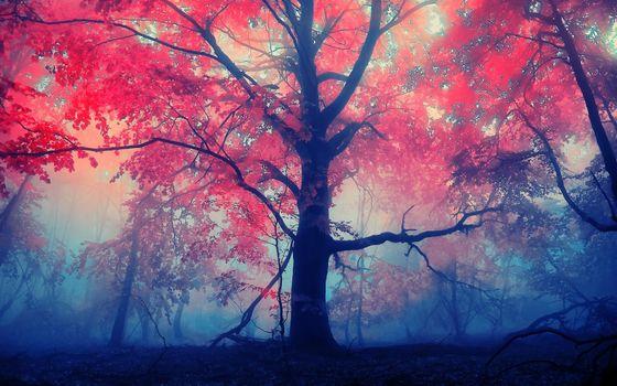 Заставки листья, туман, лес