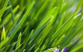 Фото бесплатно фон, капли, трава