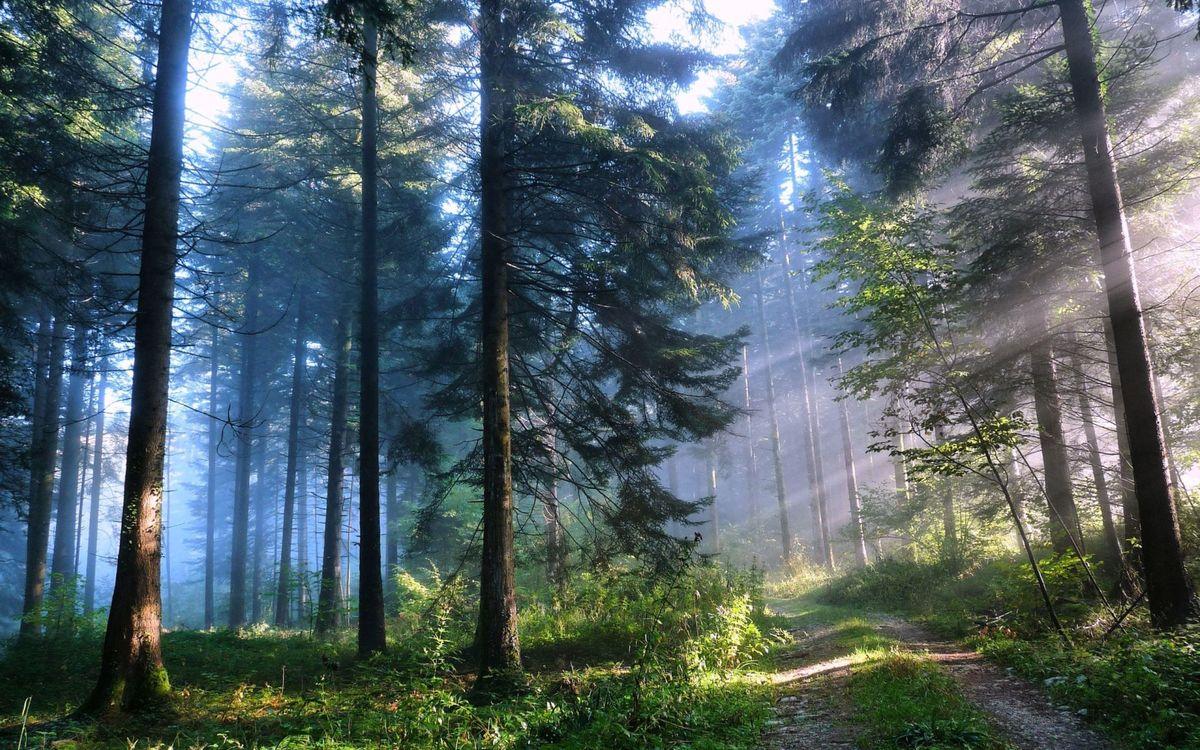 Фото бесплатно лес, пейзаж, природа, дерево, деревья, пейзажи - скачать на рабочий стол