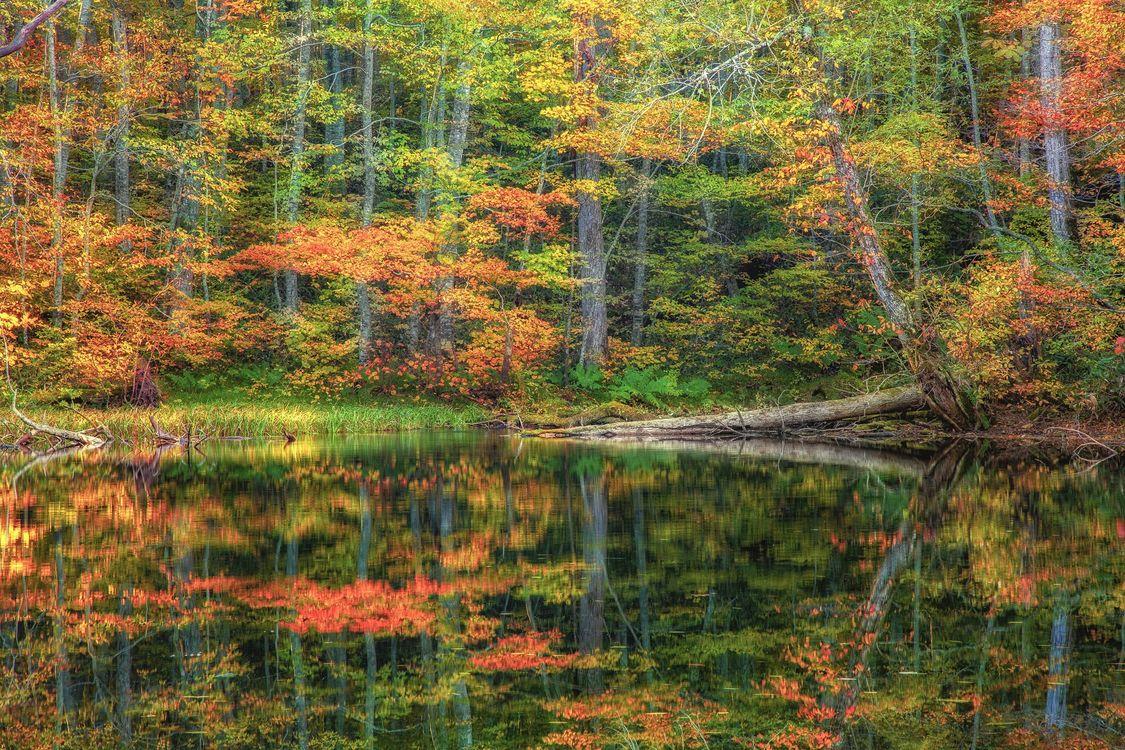 Фото бесплатно лес, деревья, река, осень, природа, пейзаж, пейзажи