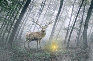 Фото бесплатно деревья, рассвет, олени