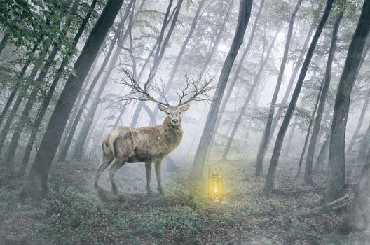Заставки олень, лес, деревья