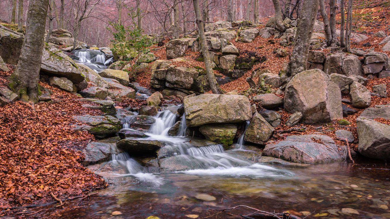 Фото осень, лес, водопад смотреть бесплатно