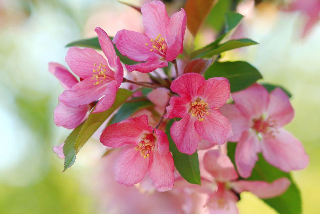 Цветущая яблоня · бесплатное фото