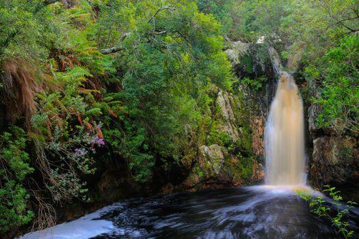 Бесплатные фото Бетти-Бей,Оверберг,Западный Кейп,Южная Африка,водопад,лес,деревья,природа,пейзаж