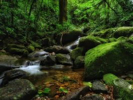 Photo free river, stream, forest