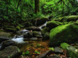 Фото бесплатно ручей, природа, пейзаж