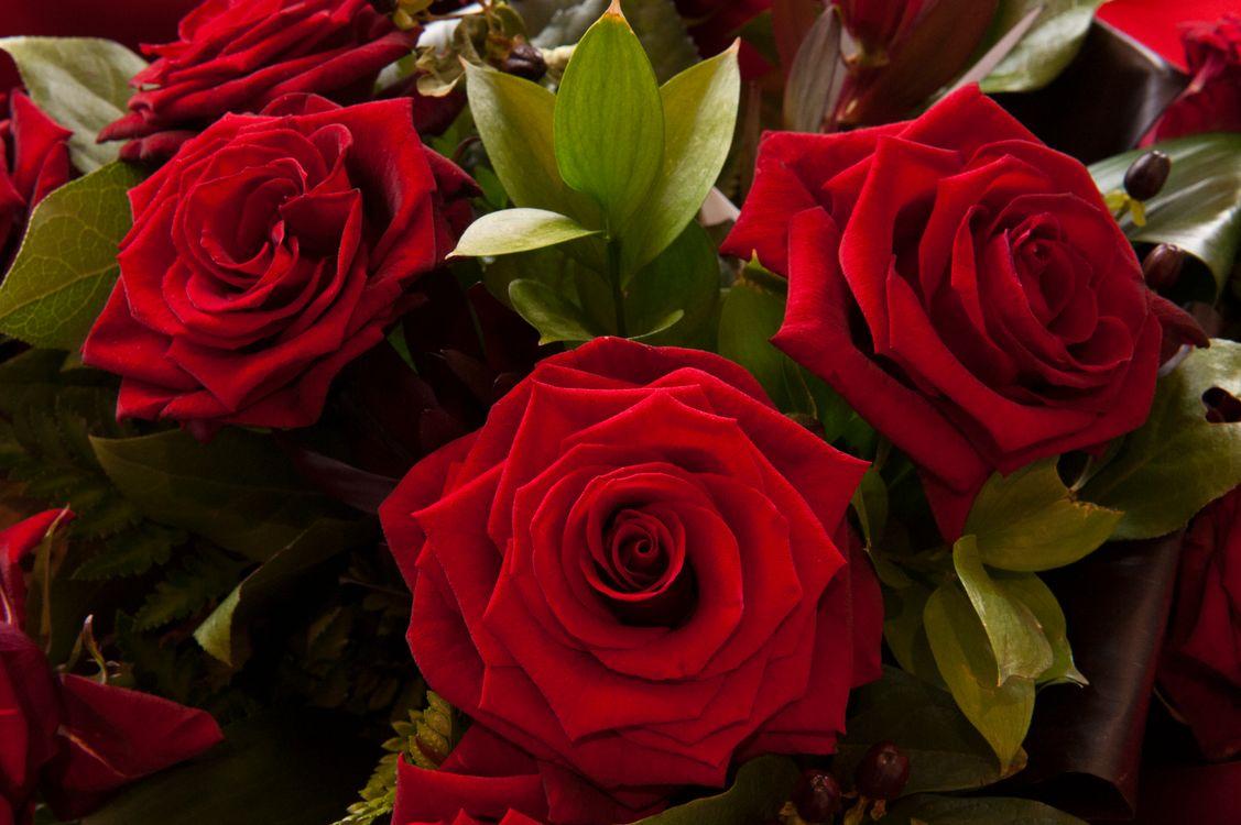 Большие цветы · бесплатное фото