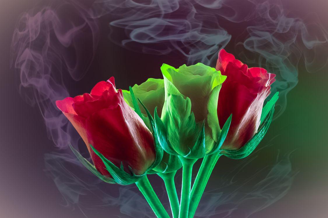 Цветы для мамы конечно же тюльпаны · бесплатное фото
