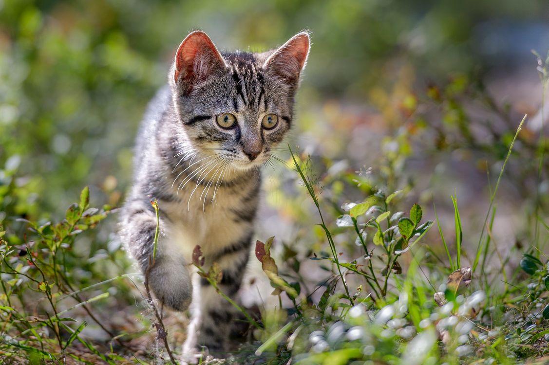 Фото бесплатно кот, котенок, охотится - на рабочий стол
