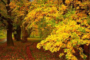 Фото бесплатно краски осени, осенние краски, осень