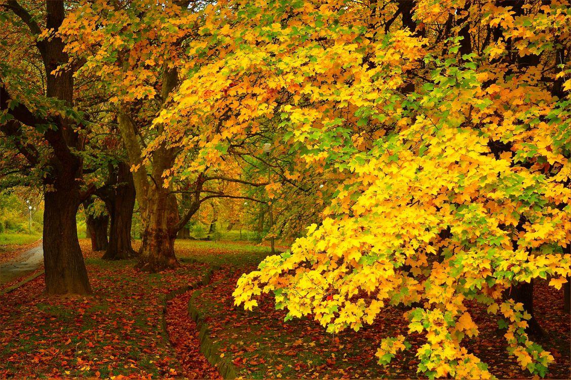 Фото бесплатно краски осени, осенние краски, осень, парк, дорога, деревья, осенняя листва, осенние листья, природа, пейзаж, пейзажи