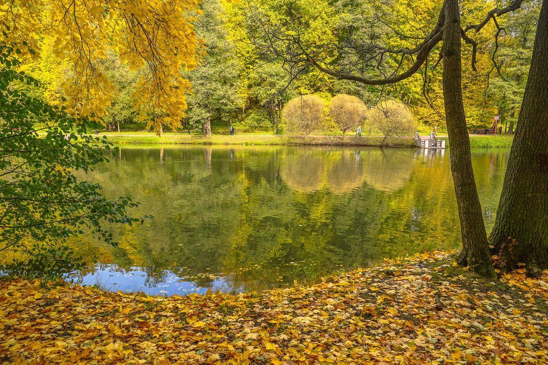 Фото бесплатно Москва, природа, осень в Москве - на рабочий стол
