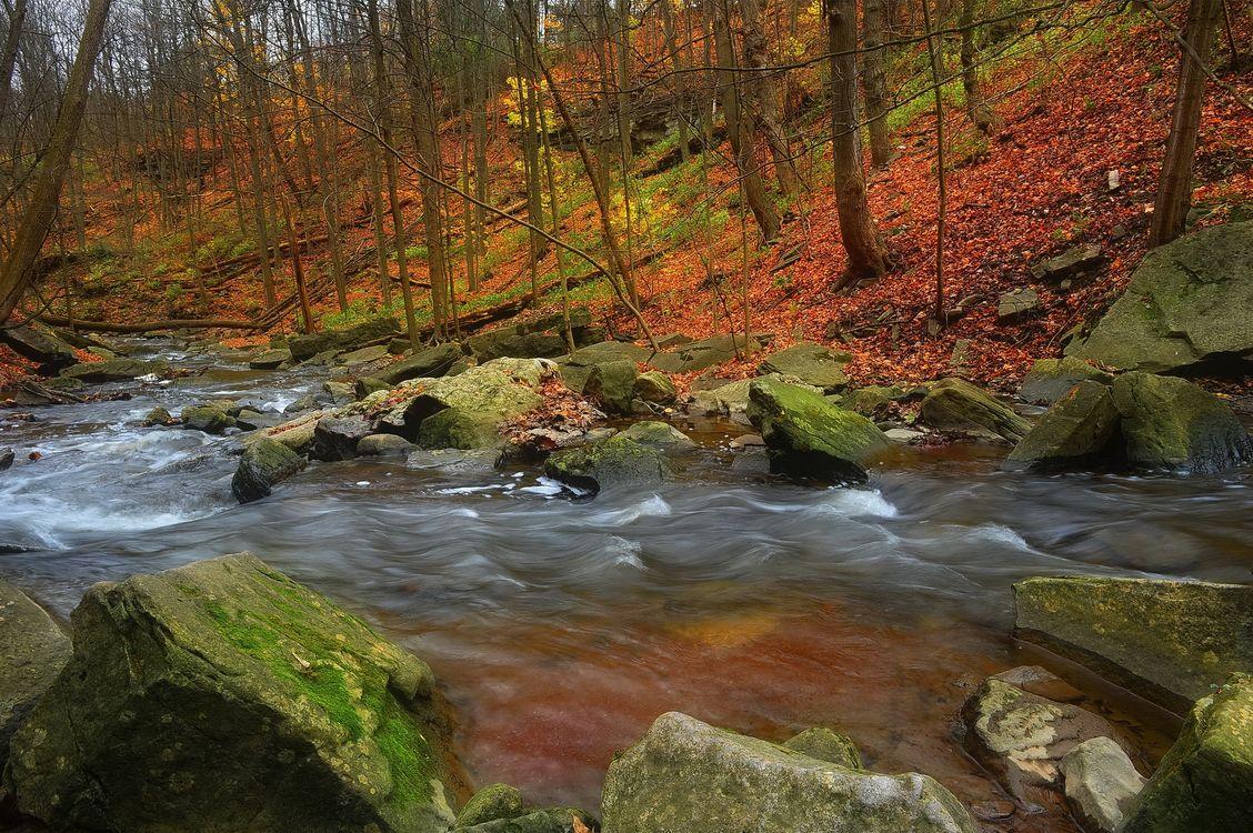 Фото бесплатно осень, река, камни, лес, деревья, природа, пейзаж, пейзажи
