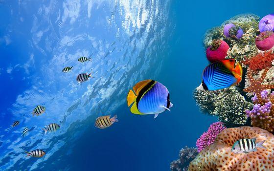 Фото бесплатно коралловая рыба, подводная, океан