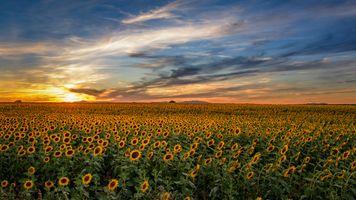 Бесплатные фото закат солнца,небо,облака,поле,цветы,подсолнухи,природа