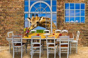 Заставки архитектуры, окна, мебель
