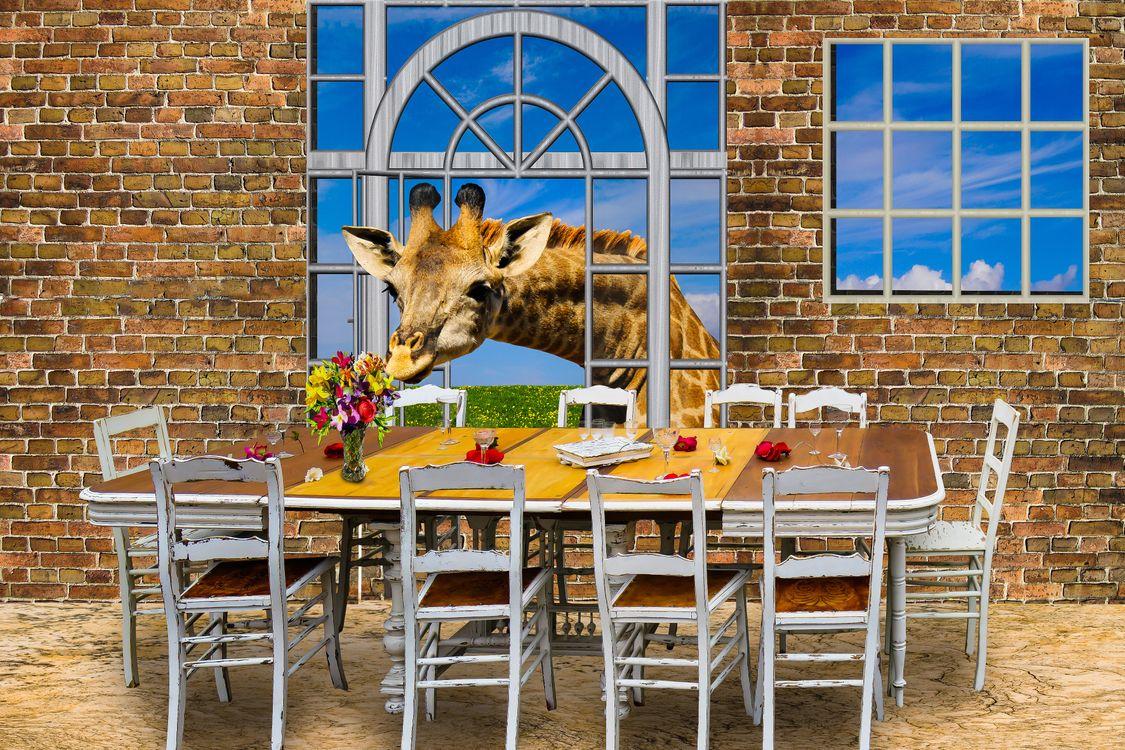 Фото бесплатно архитектуры, окна, мебель, таблице, доска, председатель, животных, жираф, цветы, букет, ваза, голод, каменные стены, составление, фотошоп, рендеринг