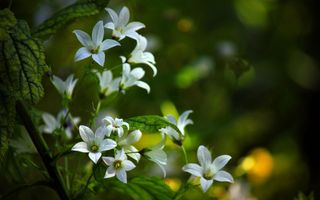 Photo free autumn flowers, white petals, flowers