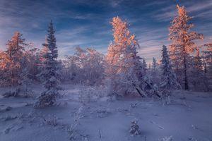 Бесплатные фото Salekhard,Russia зимняя тундра,лесотундра,закат,снег,деревья,сугробы