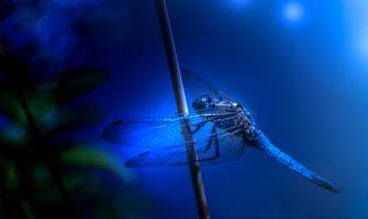 Photo free Solomina, dragonfly, blue background