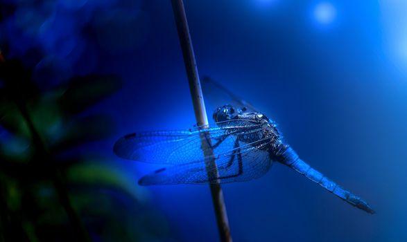 Фото бесплатно соломина, стрекоза, синий фон