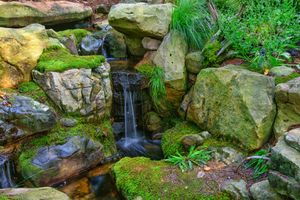 Photo free nature, moss, stones