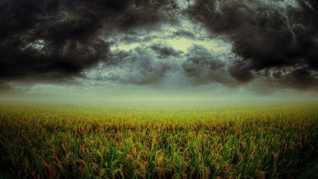 Фото бесплатно облако, растения, зеленая