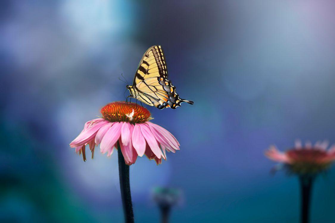 Обои цветок, цветы, бабочка, бабочка на цветке, флора, макро на телефон | картинки макро