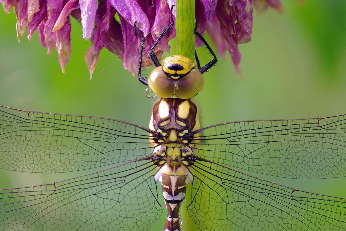 Обои стрекоза, крылья, насекомые картинки на телефон