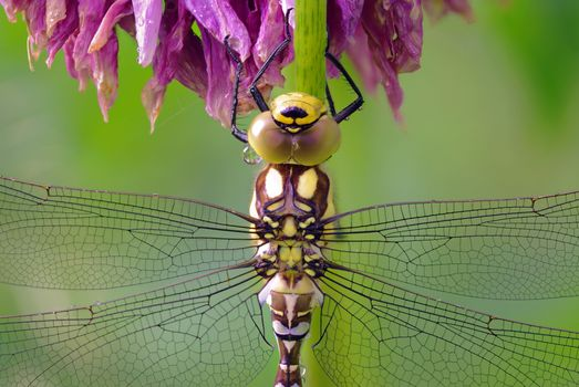 Photo free dragonfly, wings, insects