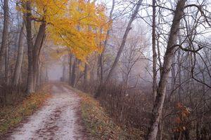 Заставки туман, пейзаж, краски осени