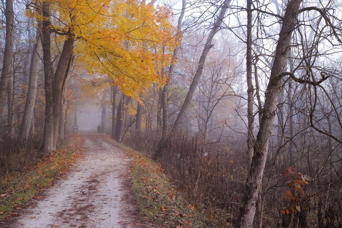 Обои туман, пейзаж, краски осени картинки на телефон