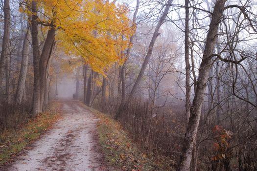 Photo free fog, landscape, paints of autumn