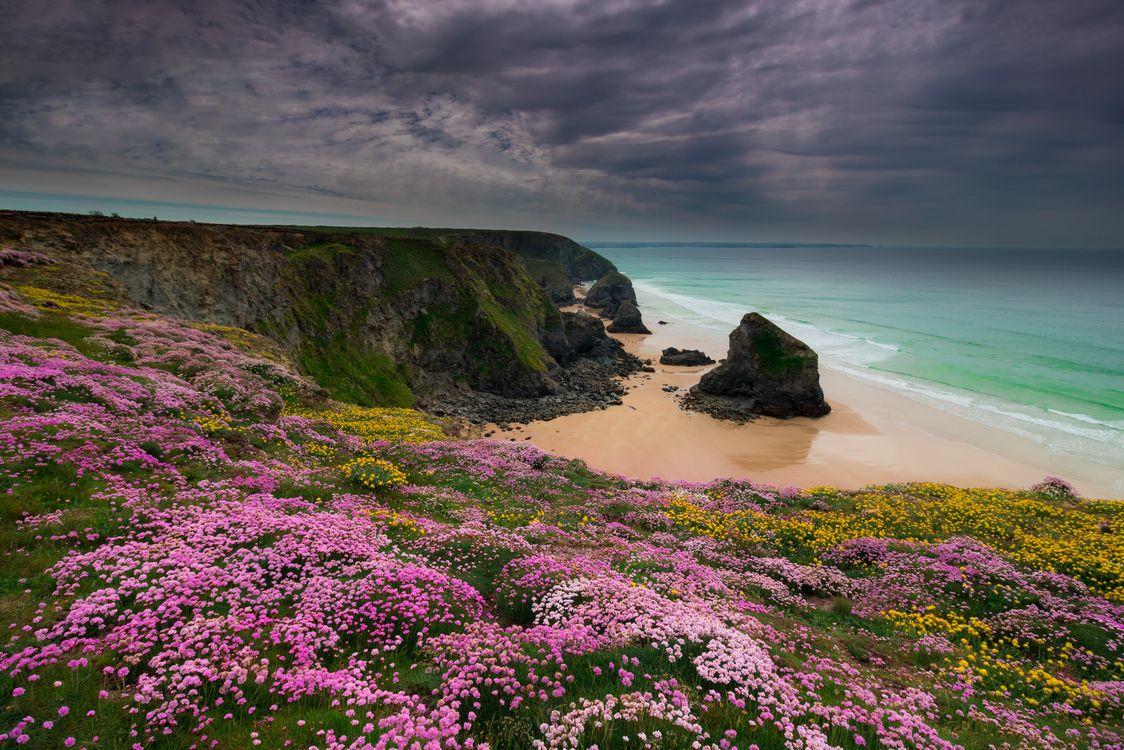 Фото бесплатно Падстоу, Корнуолл, Англия, Великобритания, море, берег, цветы, скалы, волны, пляж, пейзаж, пейзажи