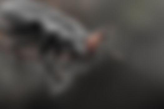 Бесплатные фото Preyed,Крупные скариты,13 мм,Carabidae,из смешанных лесов Янгамби,ДР Конго,жук